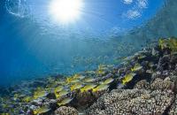 Corals in Polynesia
