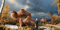 Pliocene Camel