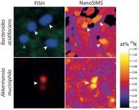 FISH NanoSIMS
