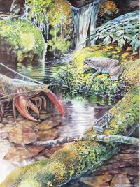Illustration of Gastric-Brooding Frog