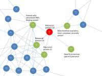 Protein Network