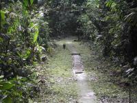 Habitat of <i>Tinkerbella nana</i>