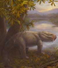 Prehistoric Dicynodont <i>Dicynodon</i>