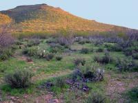 Tumamoc Hill, Tucson, Ariz.