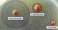 Bacteria-Free Areola