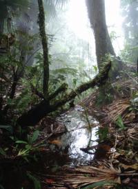 Refugio de Vida Silvestre Texiguat