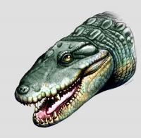 <i>Globidentosuchus brachyrostris</i>