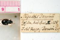 Darwin Bug