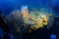 Deep-Reef, Southern Caribbean