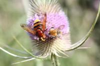 Crop Pollination