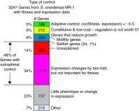 Adaptive Gene Response