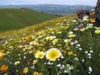 California's Plant Life