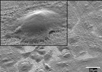 Nanobone Cells