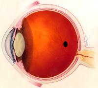 A Healthy Human Eye