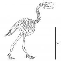 Skeleton of <i>Gastornis</i>