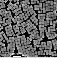 SEM of Palladium Nanocubes
