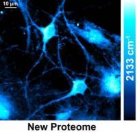 New Proteome