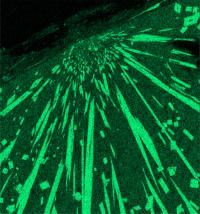 Cosmic Impact, Mullite