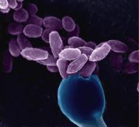 Spores and Basidia