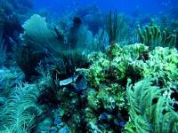 St. John Reef Communities (2 of 3)