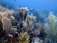 St. John Reef Communities (3 of 3)