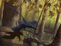 <i>Microraptor</i>