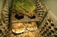 Study of Locust Diets