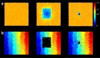 Reorganization in the Visual Cortex