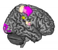 Supramarginal Gyrus Empathy