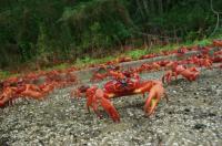 Crab March