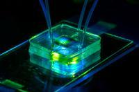 Microfluidic Bioreactor with a Nanoporous Silicon Membrane