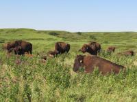 Konza Prairie (1 of 2)