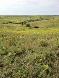 Konza Prairie (2 of 2)