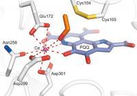 Methanol Dehydrogenase
