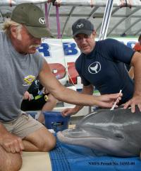 Dolphin Exam