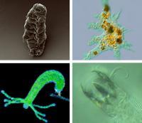 Environmental Microbes