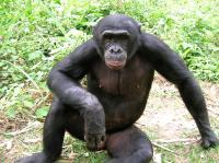 Bonobo (2 of 2)