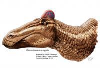 <i>Edmontosaurus regalis</i> Reconstruction