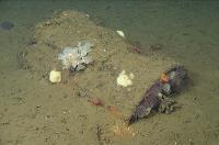 55-Gallon Drum on Seafloor in Santa Cruz Basin
