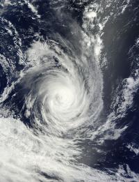 Terra Image of Bruce