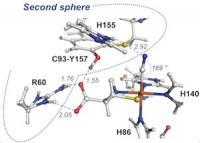 CDO Enzyme