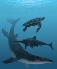 Leatherback Turtle, Mosasaur and Ichthyosaur