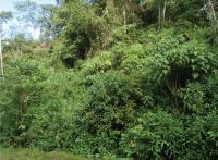 <i>Rhinella yunga</i> -- Habitat