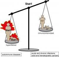 Balancing STAT1