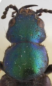 <em>Darwinilus sedarisi</em> (2 of 2)
