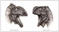 2 Cretaceous Predators