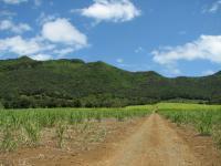Mauritius Kestrel Habitat