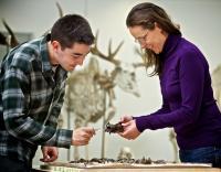 Examining Fossils