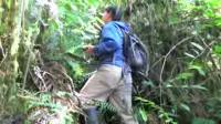 Peruvian Reptiles and Amphibians