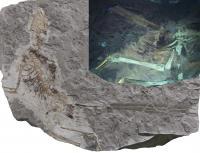 <i>Epidexipteryx</i>